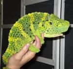 Got an insect issue, our Chameleon works for bugs - as many as you have!
